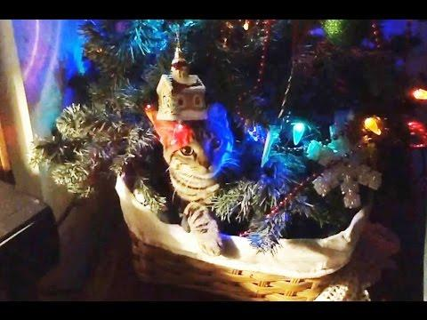 Cats Vs. Christmas Trees Compilation