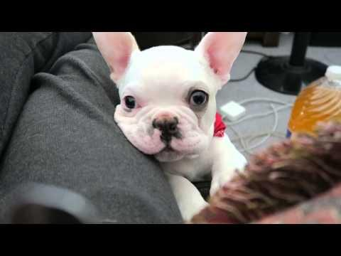 Spoiled Puppy | The Cutest Begging In The World