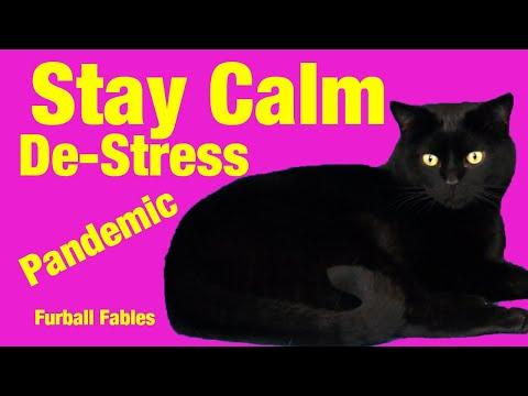 Cat Advice - How to Stay Calm & De Stress during the Corona Virus Pandemic