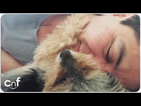 Little Yorkie Petting His Human   Good Man