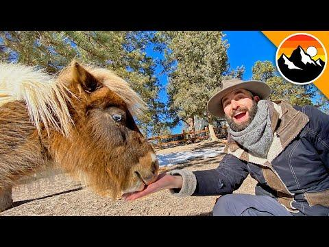 How to Take Care of a MINIATURE PONY Video!