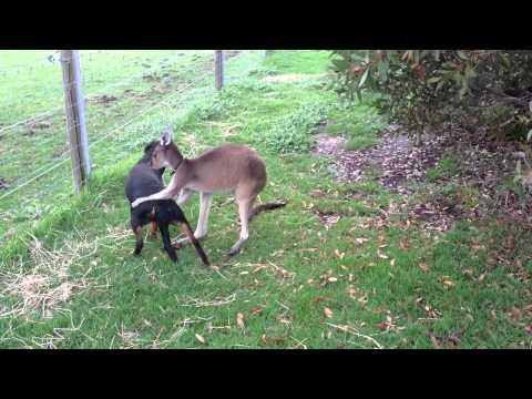 Kangaroo And Dog | Best Friends