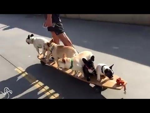 Guy Piles All Of His Dogs Onto His Skateboard With Him