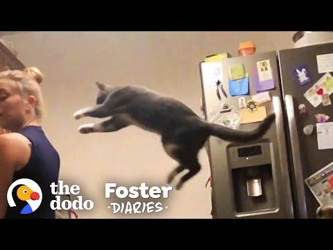 Woman Fosters A Shy, Scared Cat Video
