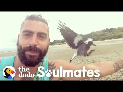 Baby Magpie Falls In Love With His Rescuer's Cat | The Dodo Soulmates