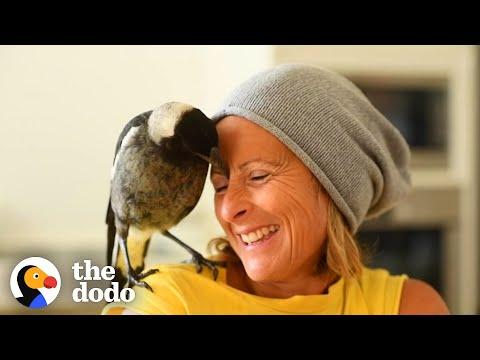 Wild Magpie Knew Exactly What This Family Needed #Video