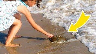 IF YOU FIND THIS ON THE BEACH, DON'T TOUCH IT AND CALL 911!