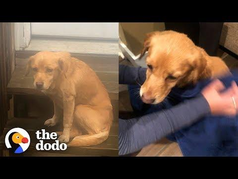 Stray Puppy Wanders Into Stranger's Home in the Middle of Night |The Dodo