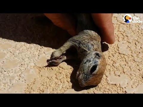 Guy Saves Prairie Dog From Pool | The Dodo