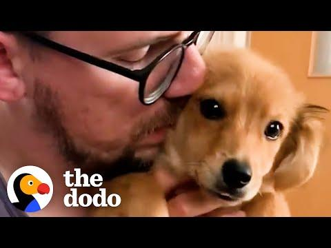 Shy Foster Puppy Cuddles With Her Dad For The First Time Video
