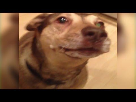 Dog Sings Beethoven's 5th