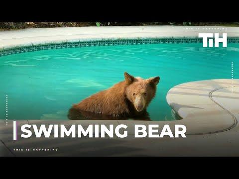 Bear Cools off in Backyard Pool on a Hot Summer Day in California Video