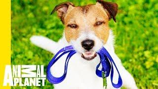 How To Make The Most Of The Great Outdoors With Your Pet!