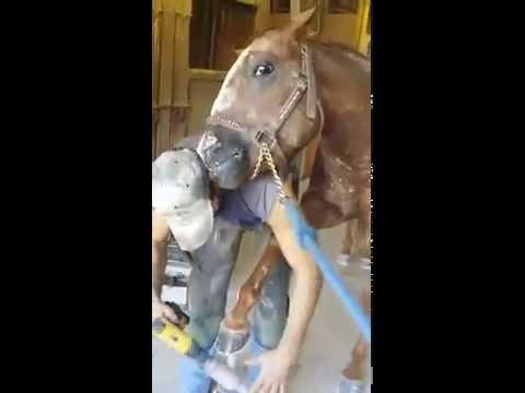 Horse Licks Owner For Putting Hoof On