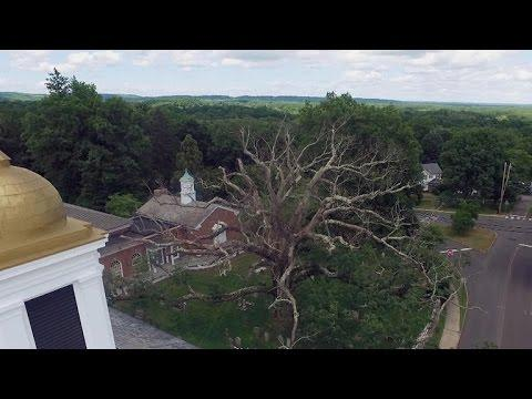 New Jersey town saying goodbye to 600-year-old icon