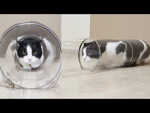 Reducing Transparent Tube for the Cat. Go Through or Get Stuck? #Video