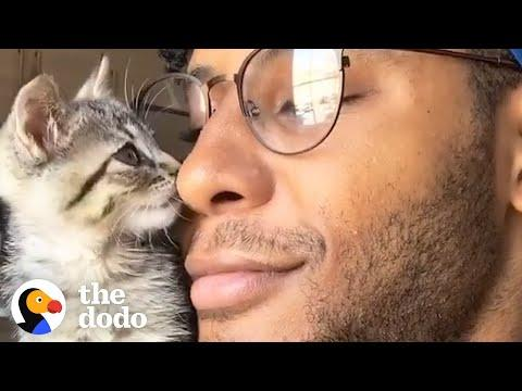 Kitten Goes For Walks On Dad's Shoulder #Video