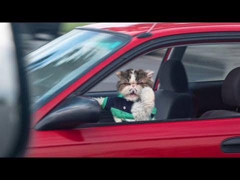 Pet Peeves - Driving. Aaron's Animals