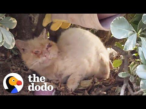 Watch This Scruffy Feral Cat Turn Into A Blue-Eyed Beauty Video