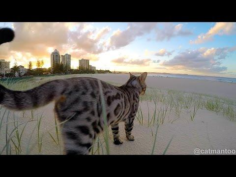 Kitten At The Beach In Slow Motion