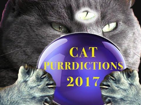 CAT PURRDICTIONS For 2017 - #PREDICTION2017