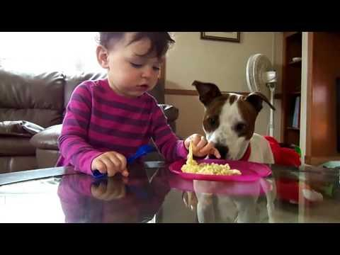 Dog Steals Noodles From Baby's Mouth