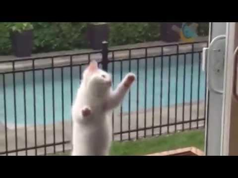 Funny And Adorable Kittens And Cats Compilation 2015
