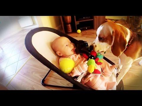 Guilty Dog Apologizes To Baby For Stealing Her Toys