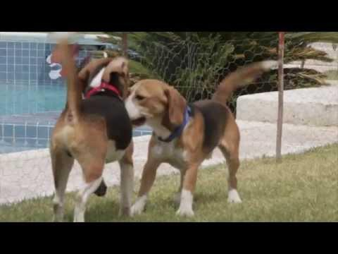 Oh Happy Day! - 9 Beagles Rescued From Test Lab