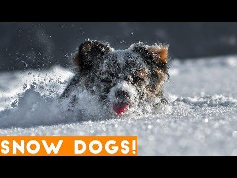 Funniest Snow Dog Video Compilation December 2018 | Funny Pet Videos