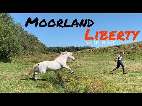 Moorland fun with Flint | Bodmin Moor | Liberty |Just One Pony!