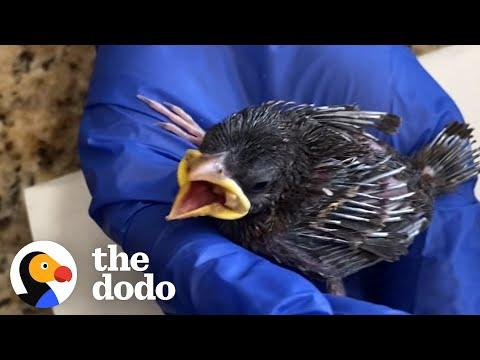 The Most Amazing Thing Happens After Wild Bird Is Released #Video