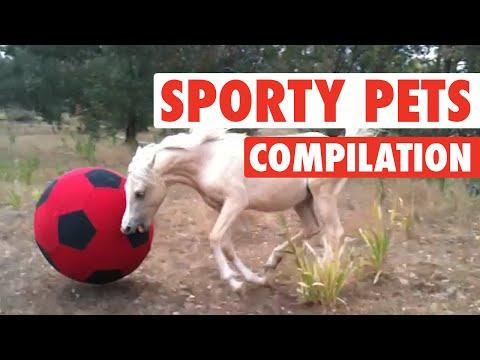 Pets Who Are Huge Sports Fans (Awesome Compilation)