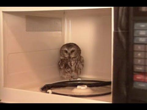 Candid Camera Classic: Microwave Hoot!