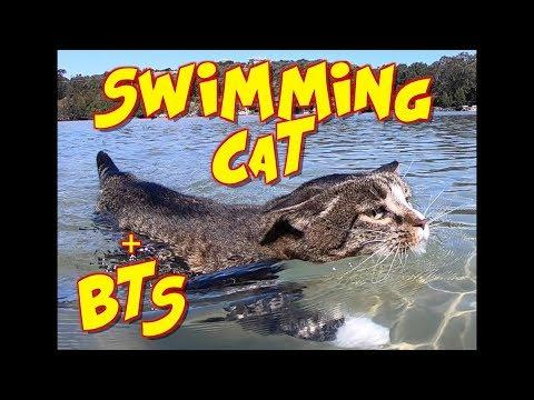 Swimming Cat Didga