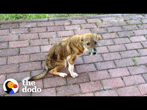 Stray Puppy Knew Exactly Who Could Save His Life Video