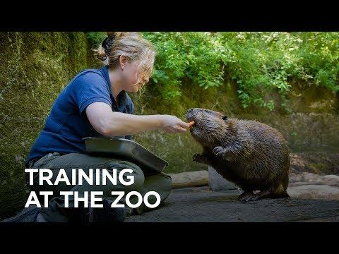 Why Train Animals at the Oregon Zoo?