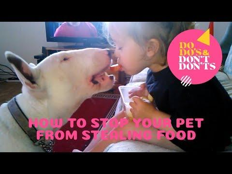 How to Stop Your Pet From Stealing Food | Do-do's & Don't-don'ts
