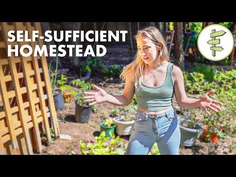 Homesteading Couple Hasn't Bought Groceries in a Year of Self-Sufficient Living #Video