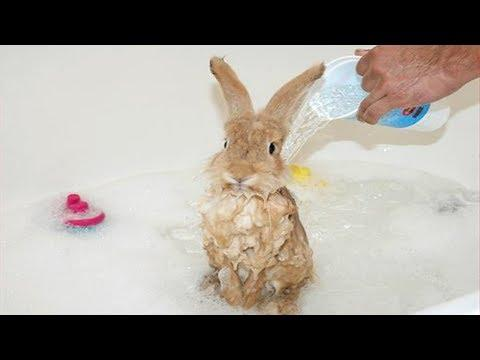Funny And Cute Bunny Videos Compilation Of Rabbits