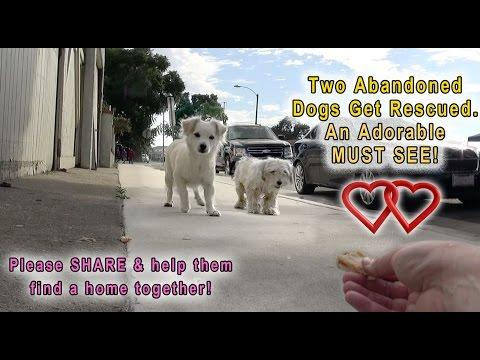 A Dog Rescue Video That Will Make You Laugh, Smile & Believe In True Love!