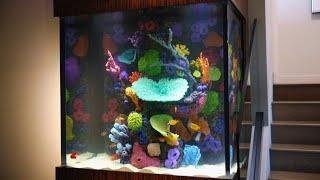 This Fish Tank Is Ludacris!   Tanked