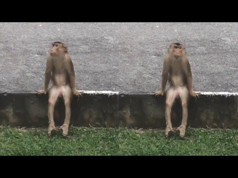 A Monkey That Sits Like This Video. Your Daily Dose Of Internet.