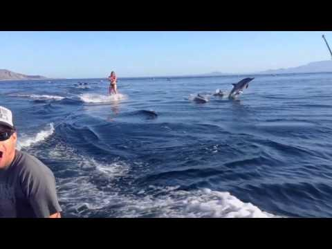 Dolphin Surfing - Woman Wakeboarding With Dolphins