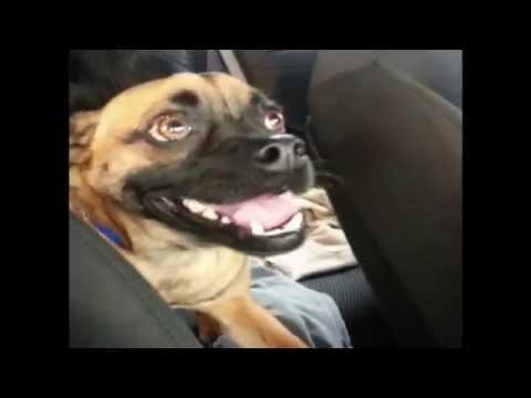 Dog Laughs Like A Human