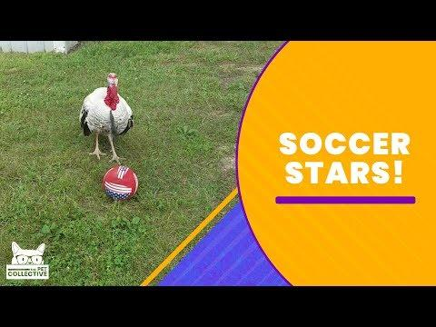 Soccer Stars of the Animal Kingdom