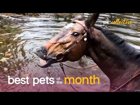 Best Pets of the Month Video (February 2021) | The Pet Collective