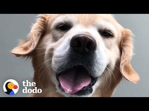 This Golden Retriever Gets BAMBOOZLED | The Dodo