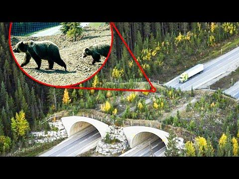10 Awesome Bridges For Animals Video