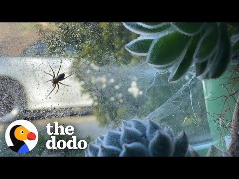 Woman Terrified Of Spiders Lets One Move Into Her Houseplant #Video